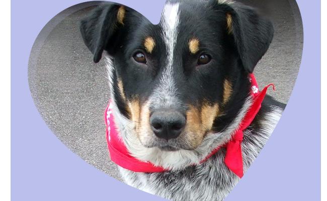 Second Chance Animal Rescue :: Minnesota