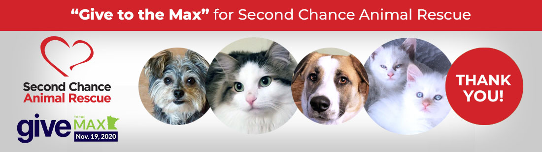 Second Chance Animal rescue banner featuring rescue dogs and cats.